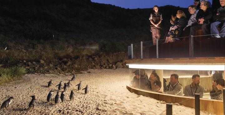 ...machen Sie erstmal Halt auf Phillip Island, wo Sie den süßen Frackträgern bei der allabendlichen..