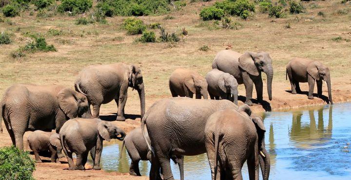 Packen Sie Ihre Kamera und Ihr Fernglas ein: Mit einem erfahrenen Ranger geht es auf Safari.
